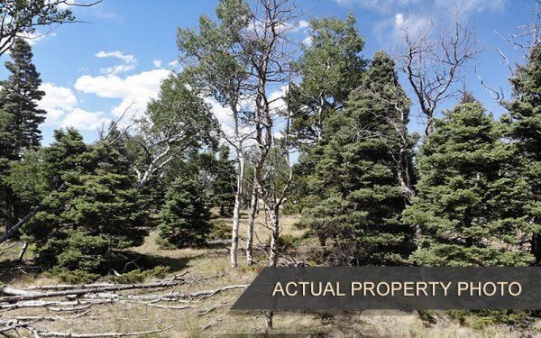 Wooded Property Surrounded by Mountains and Spectacular Views - 1.96 Acres in Forbes Park, CO